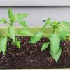 野菜 プランター栽培の育て方。この動画がとても分かりやすく参考になりました
