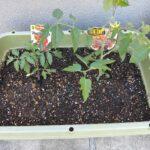 2021年 我が家の家庭菜園!古い土はリサイクルの土と混ぜて